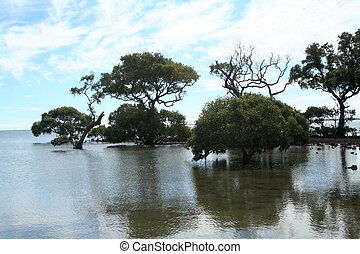 Trees in the Water - A serene beach showing trees growing in...