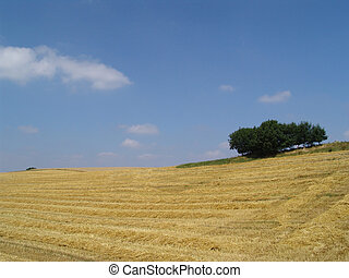 harvest summer - mown crop field