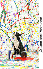 Artistic Pup - Black and white Boston Terrier sitting on...