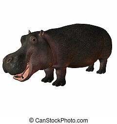Hippopotamus - 3D Animal