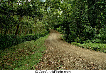 Dirt Road thru forest - Dirt Road through rain-forest