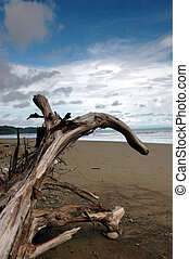 Driftwood Log with arching branch