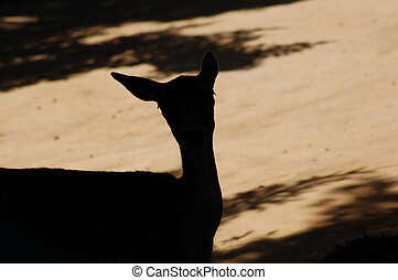 Deer in the Shadow - Deer