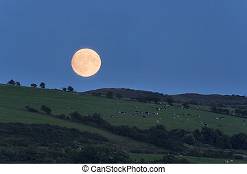 bute moonrise - A summer Moon rising over the fields of...