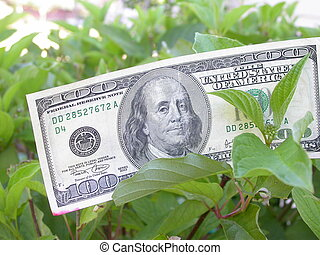 Money Tree - a real one hundred dollar bill growing on a...