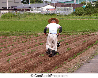 Japanese farmer working in the field