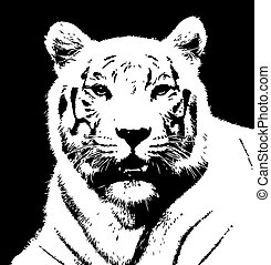 Tiger 1 - Tiger Black and white image