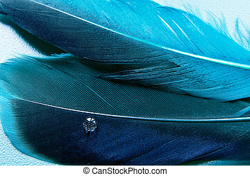 A little more blue feather - Emplumed mood with accent on a...