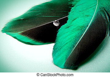 A little more green feather - Emplumed mood with accent on a...