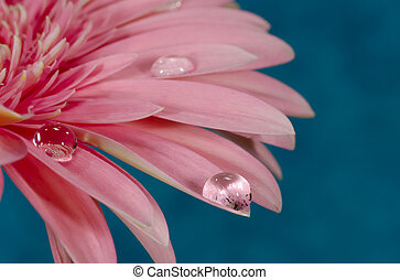 Dew Drop - Water Drops on a Flower