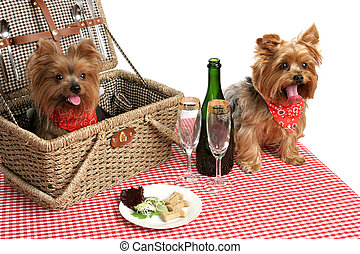 Puppies on Picnic - Two adorable yorkies on a picnic with...