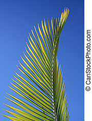 Palm Frond - A palm frond found in tropical Queensland,...