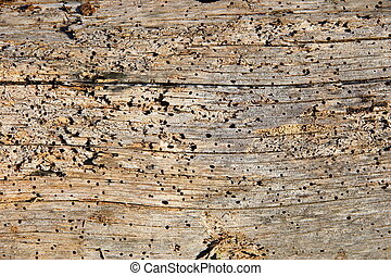 Barn Wood Texture - Worm eaten old barn plank texture