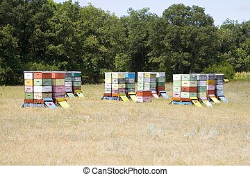 Bee Hives 1 - A group of bee hives sits in a farmer\\\'s...