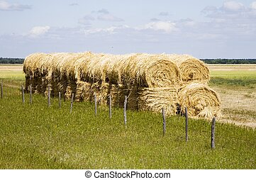 Straw Bales - A row of straw bales signals the end of...