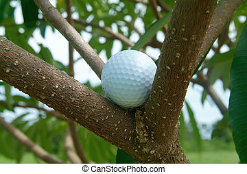 Golf ball in tre - Golf ball caught among the branches of a...