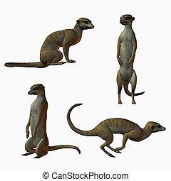 Meerkat - 3D Animal