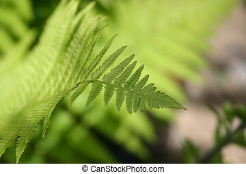 fern in the sunshine