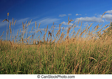 Grassy Field with Brilliant Blue Sky