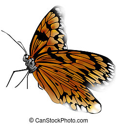 Butterfly - Real butterfly