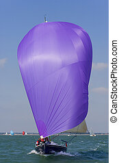 Purple Sail - A yachts racing with purple spinnaker raised...