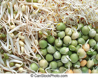 fresh sprouts - Close-up of delicious fresh sprouts ready...