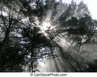Sun Beams shining through the trees