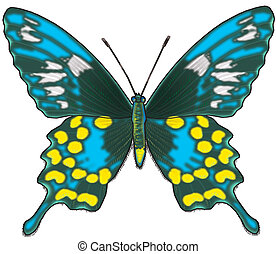 The butterfly 2 - The butterfly
