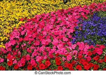 Diversity of Trumpet Flowers - Diversity of trumpet flowers...