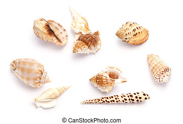 Shells against white background
