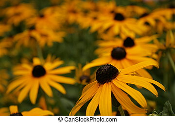 Yellow Flowers - Beautful flowers shot in natural light in...