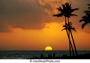 Tropical sunset - Tropical summer sunset with palm trees and...