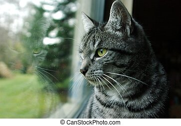 Cat at the window - Cat is looking outside and mirrored in...