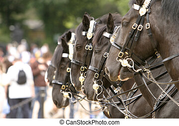 Horses Changing Guard - Four horses standing in a line...