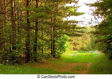 soleado, bosque