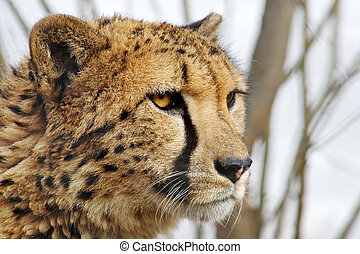 Handsome cat - Attentive sight of the young wild animal