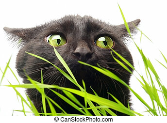 Cat & Grass - Grass not harms!?!