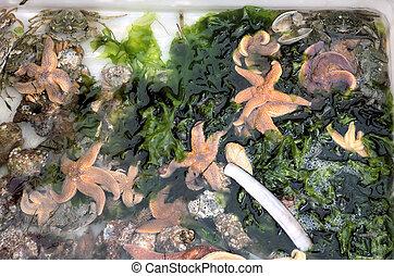 Starfish and crabs