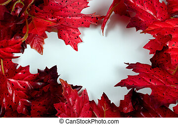 Red Maple Frame - Frame of Red Maple Leaves on a Bright...