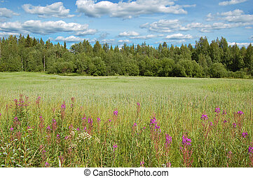Finnish meadow - Summer meadow in Finland