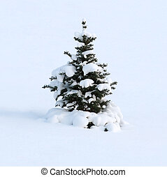 Winter dream of a fur-tree - The young fur-tree as if has...