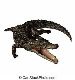 Crocodile - 3D Animal