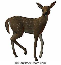 Fawn - 3D Animal