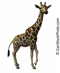 Giraffe - 3D Animal