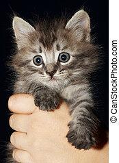 kitten over black - hand holding the kitten