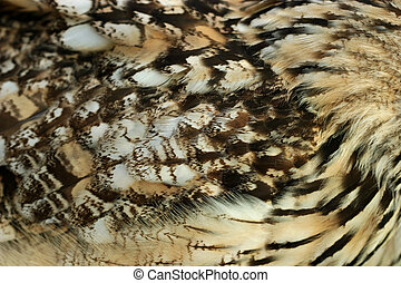 Owl Feathers - Close up of the feathers on the wing of an...