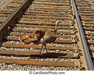 Turkey Crossing - A careless wild turkey crosses railroad...