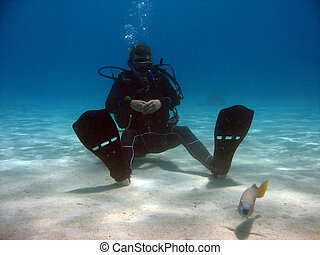 Diver sitting on sand looking at a fish the sea here has a...