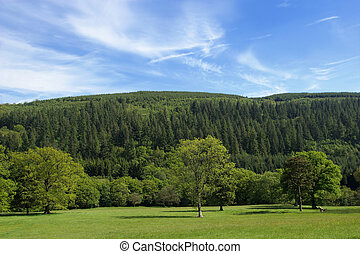 Greens - Broad leaf trees of mainly oak in rural meadows in...