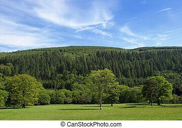 Greens - Broad leaf trees of mainly oak in rural meadows in...